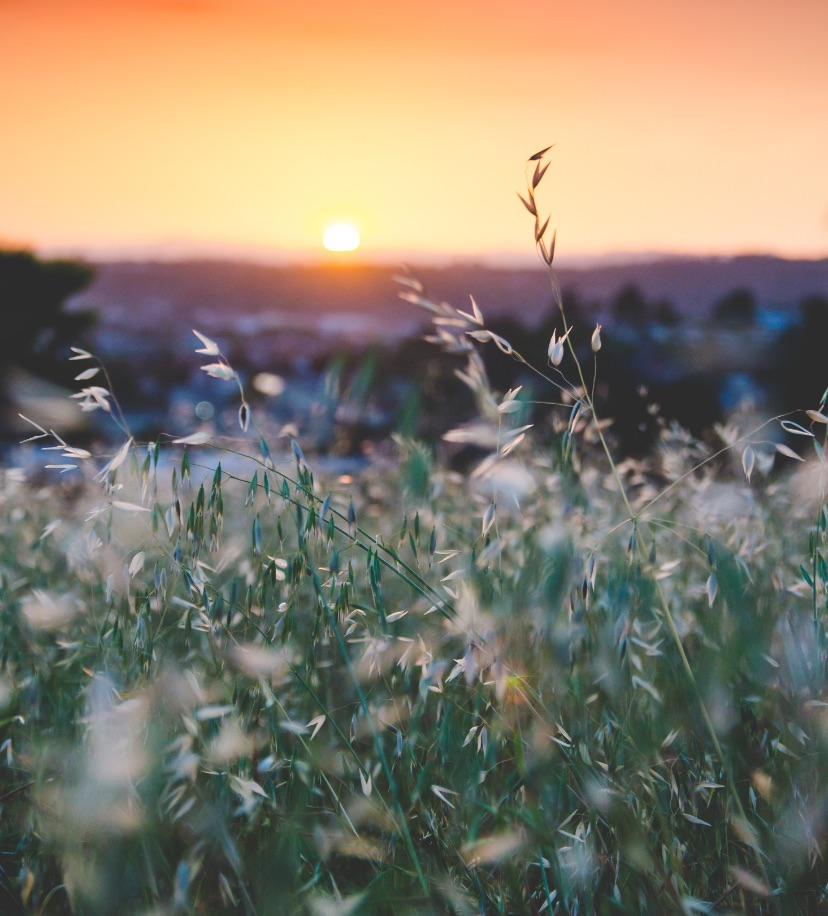 A field at sunset